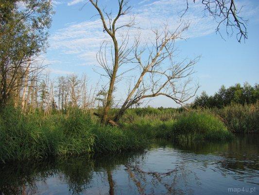 Rezerwat Rawka. Meandry rzeki w okolicach Joachimowa-Mogił.