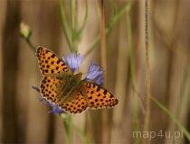 Przyroda. Motyl. (fot. Dominik Łęgowski)