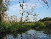 Rezerwat Rawka. Meandry rzeki w okolicach Joachimowa-Mogił. (fot. Maciej Kronenberg)