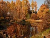 Rogów. Arboretum (fot. Monika Krawętek-Foryś)