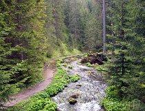 Tatrzański Park Narodowy. Dolina Chochołowska (fot. Marek i Ewa Wojciechowscy)