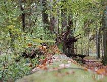 Białowieski Park Narodowy (fot. Agnieszka Rytel)