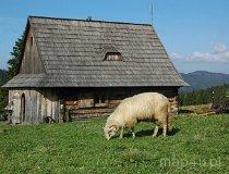 Gorczański Park Narodowy. Chata pasterska w Gorcach (fot. Piotr Wojtaszek)