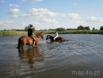 Konie, ludzie i bezpieczeństwo. (fot. Małgorzata Kielek)