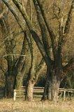Przyroda. Drzewa. (fot. Dominik Łęgowski)