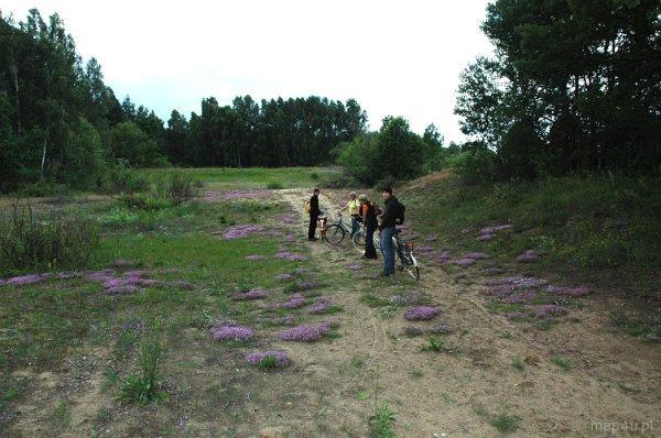 Biebrzański Park Narodowy. Ścieżka edukacyjna Wydmy