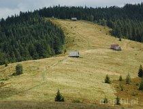 Gorczański Park Narodowy.  Hale pasterskie w Gorcach (fot. Piotr Wojtaszek)