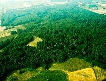 Kurów. Rezerwat przyrody Lasek Kurowski (fot. Kacper Dondziak)