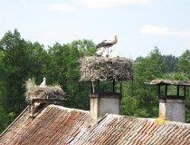 Żywkowo. Bociania wieś (fot. Maciej Kronenberg)