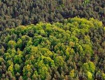 Rezerwat Ostrężnik (fot. Kacper Dondziak)