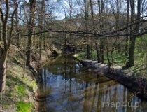 Talar. Rzeka Grabia (fot. Piotr Solle)