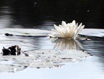 Rezerwat przyrody Brzozowe Bagno (fot. Sabina Piłat)